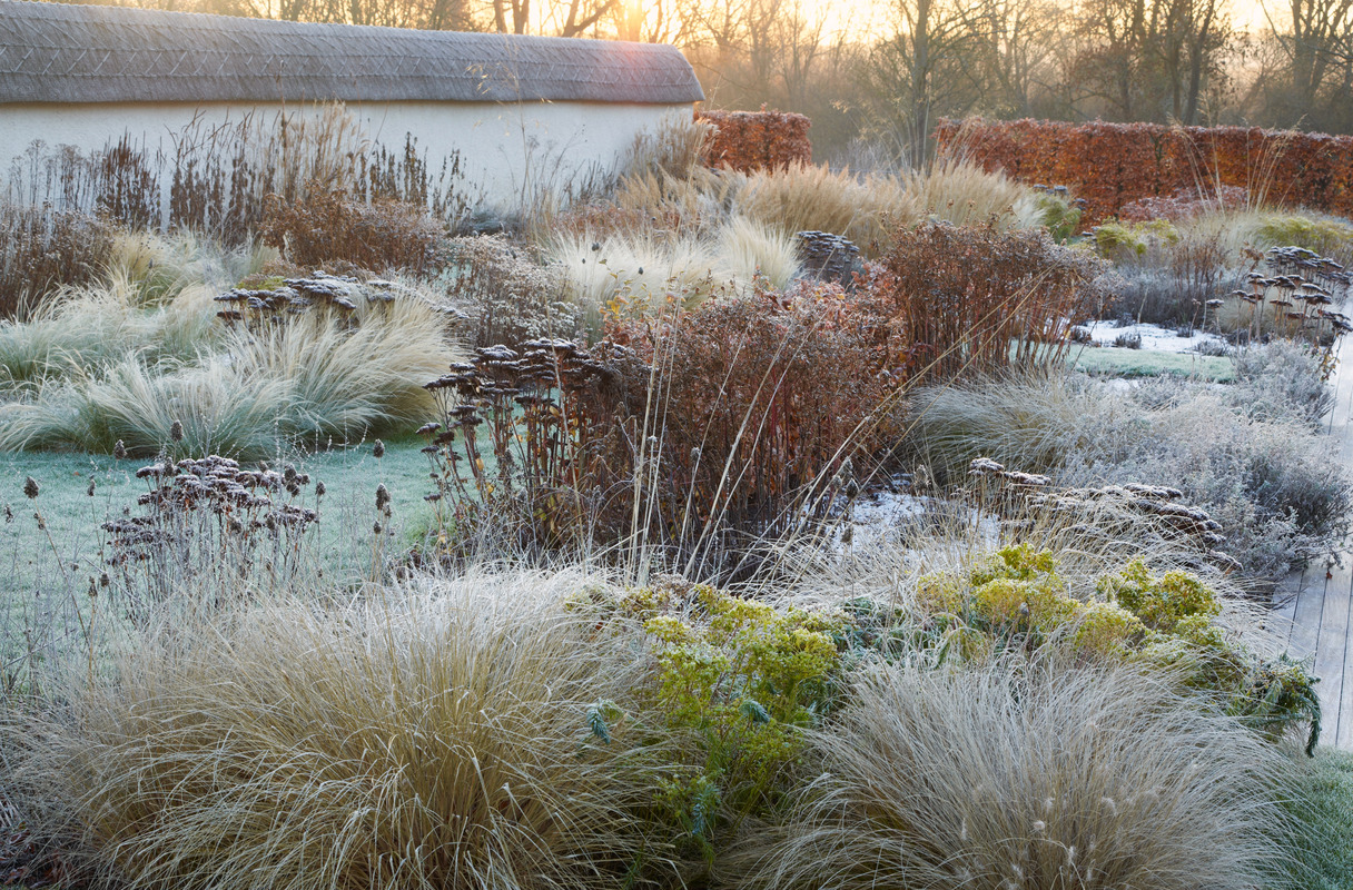 expert advice 9 tips for a colorful winter garden winter garden
