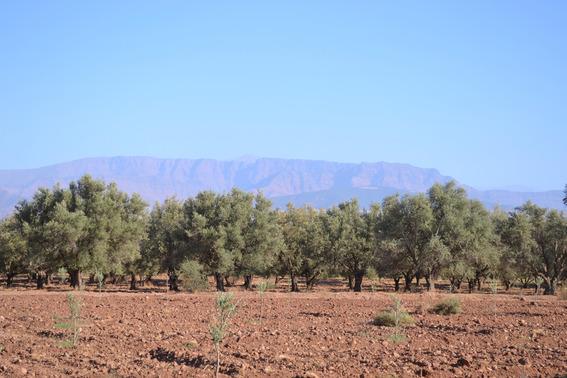 Blog_141020_moroccan_nursery_visit_blog_11