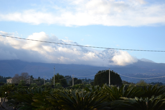 Blog_view_of_mt_etna_across_cycas_revoluta