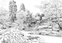 Thumb_170206_rockery_view_of_new_path
